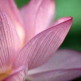 Lotus spa annapolis md
