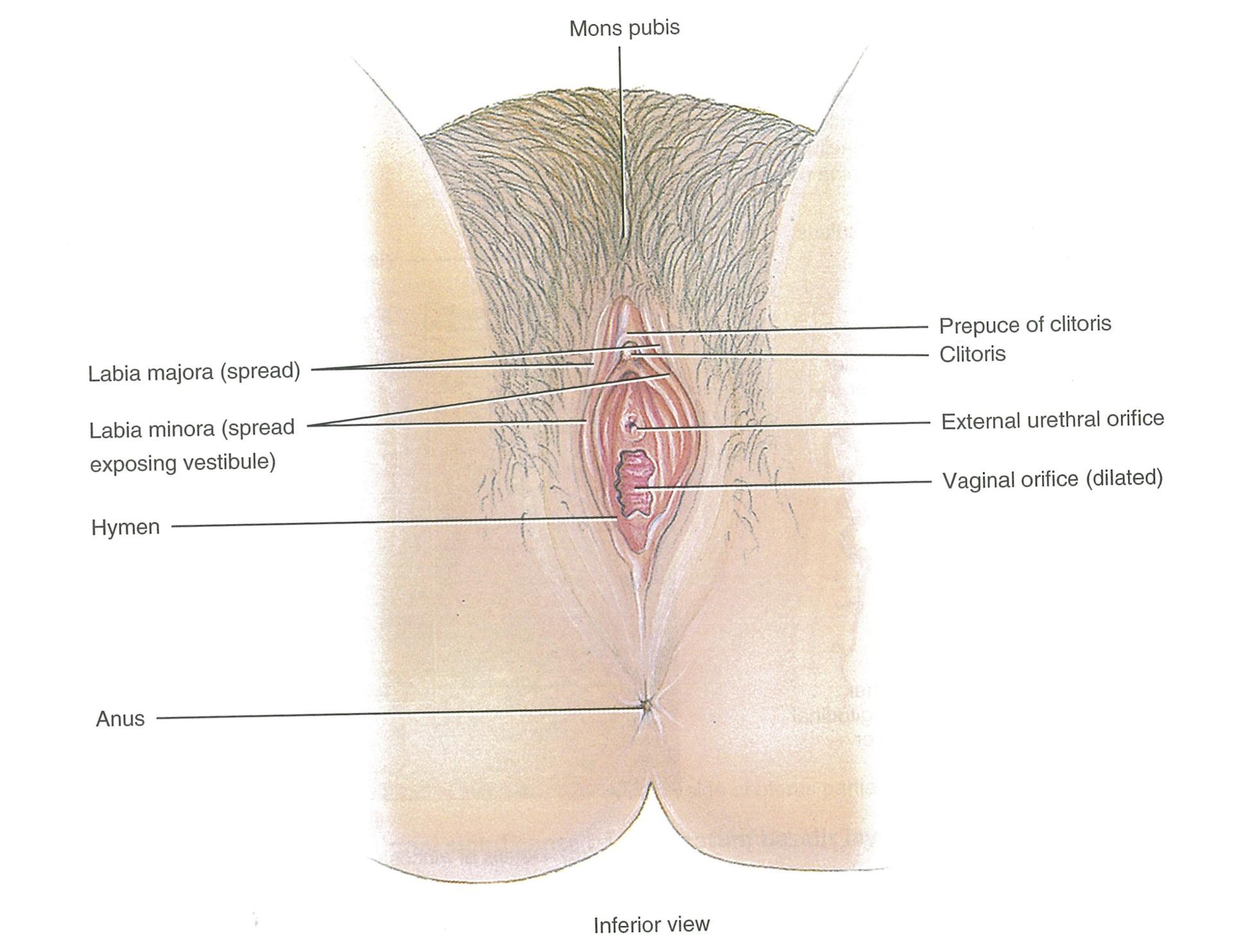 Xxx Public bathroom dildo masturbation